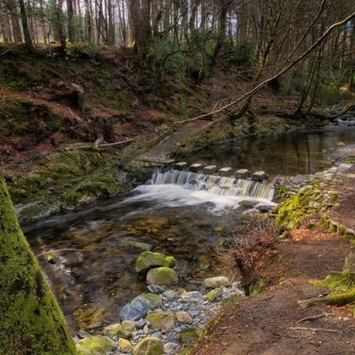 16529_Tollymore Forest Park